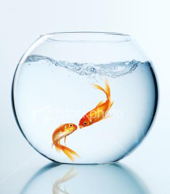 ماهی رنگی